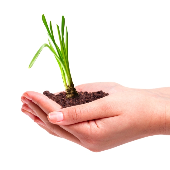 shutterstock_160565801 (new growth, hands with plant)